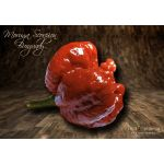Moruga Scorpion Burgundy