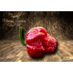 Trinidad Moruga Scorpion Red UV