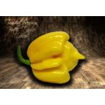 Trinidad Scorpion Butch Taylor Yellow